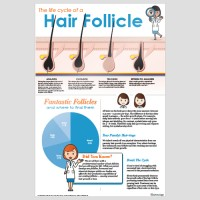 Hair Growth Infographic Poster - 24x36